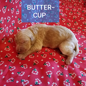 BUTTER-CUP